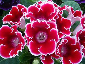 floratateno2
